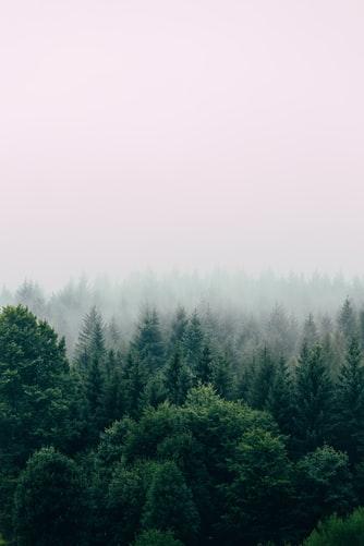 Šuma na prodaju